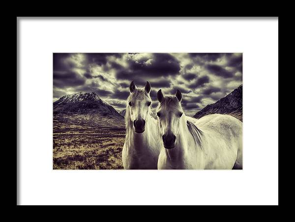 White Horses Framed Print featuring the photograph Wild Stallions by Sam Smith Photography