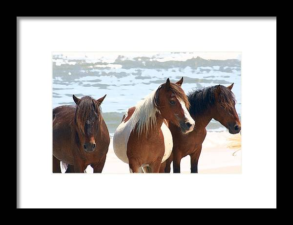 Assateague Framed Print featuring the photograph Wild Trio by JB Stran