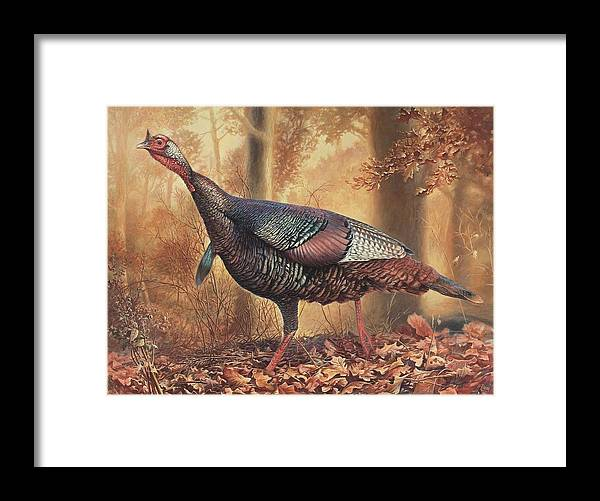 Wild Turkey Framed Print featuring the painting Wild Turkey by Hans Droog