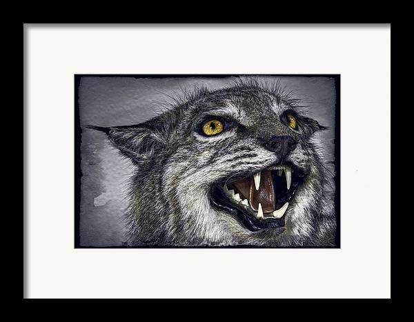 Wildcat Framed Print featuring the photograph Wildcat Ferocity by Daniel Hagerman