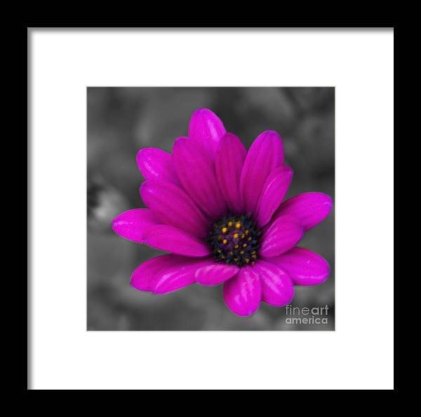 #nature Framed Print featuring the photograph Wildflower 1 by Jacquelinemari