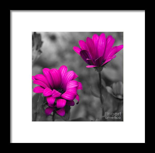 #nature Framed Print featuring the photograph Wildflower 2 by Jacquelinemari