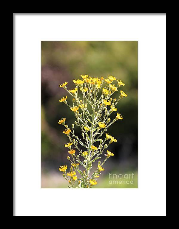 Nature Framed Print featuring the photograph Wildflower by Henrik Lehnerer