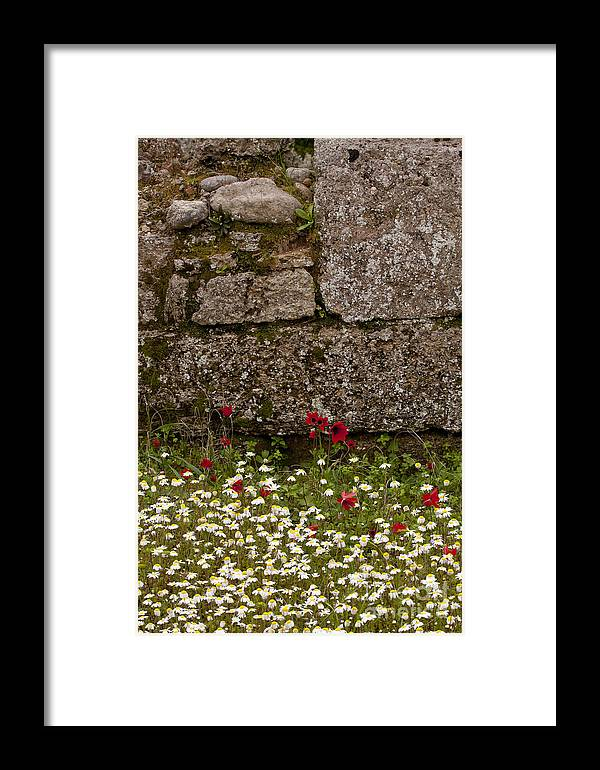 Olympia Framed Print featuring the photograph Wildflowers And Olympia Ruins  #9508 by J L Woody Wooden