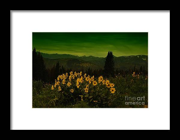 Beartooth Mountains Framed Print featuring the photograph Wildflowers In The Beartooth Mountains by Jeff Swan