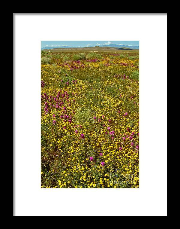 Wildflowers In Bloom Framed Print featuring the photograph Wildflowers Vertical by David Zanzinger