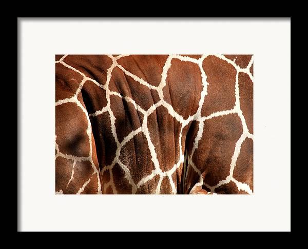 Giraffe Framed Print featuring the photograph Wildlife Patterns by Aidan Moran