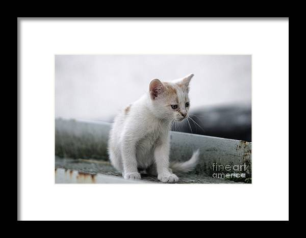 Cat Framed Print featuring the photograph Will You Be Mine by Szalonaisa Photography