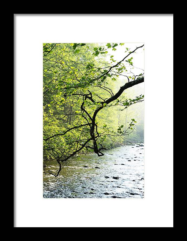 Williams River Framed Print featuring the photograph Williams River Mist by Thomas R Fletcher