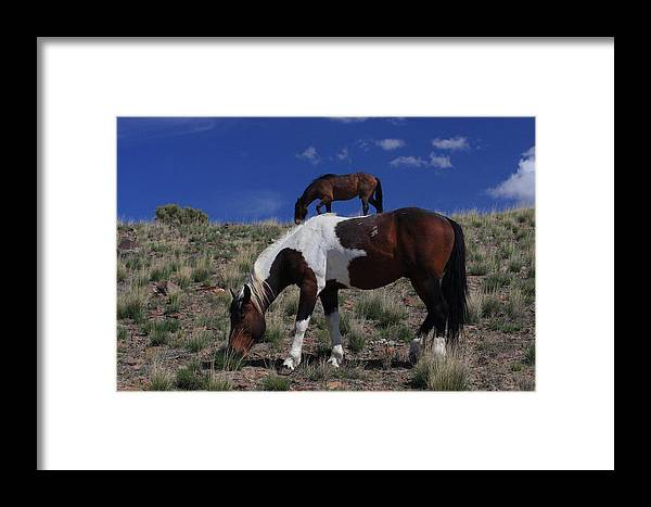 Wild Framed Print featuring the photograph Wind Walkers by Gene Praag