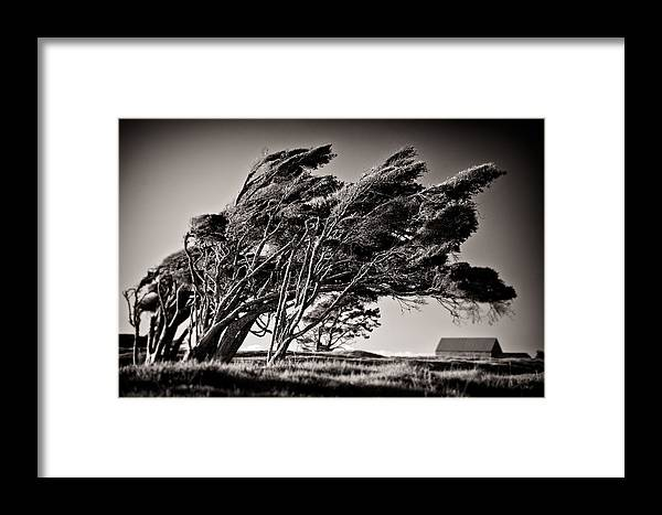 Windswept Trees Framed Print featuring the photograph Windswept by Dave Bowman