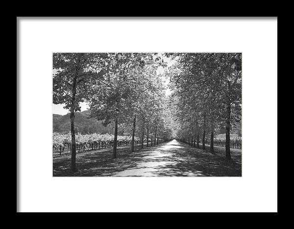 Black And White Framed Print featuring the photograph Wine Country Napa Black And White by Suzanne Gaff