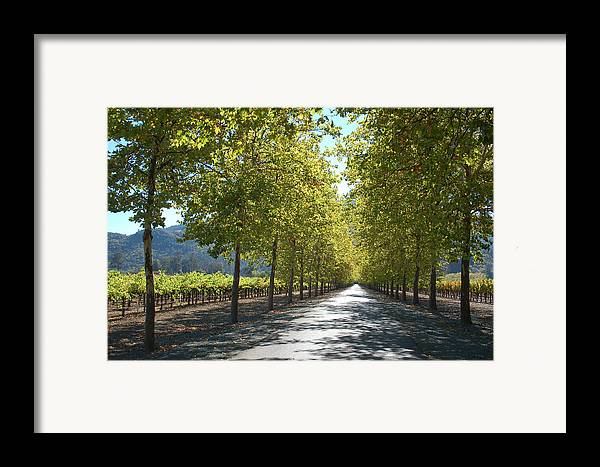 Napa Framed Print featuring the photograph Wine Country Napa by Suzanne Gaff