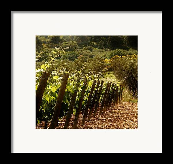 Wine Framed Print featuring the photograph Wine Growing Pouring And Enjoying by Christine Burdine