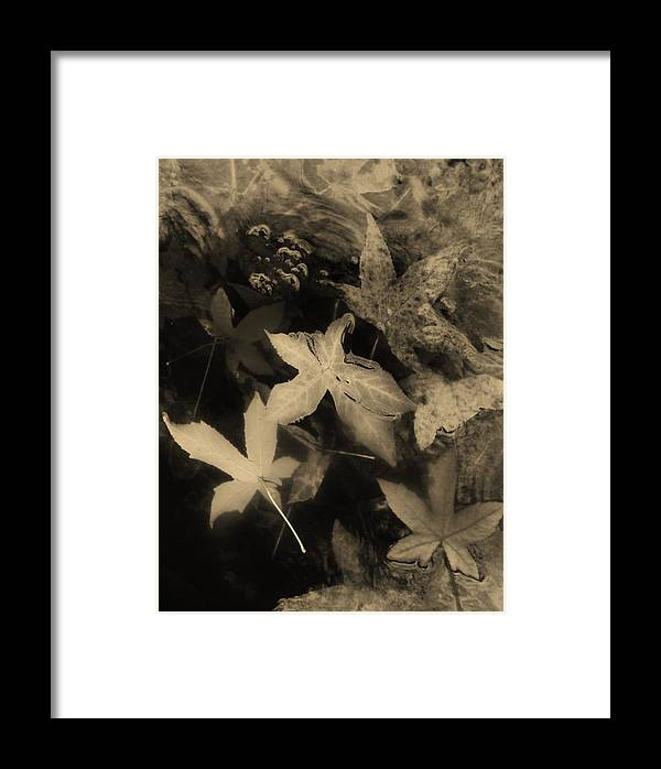 Nature Framed Print featuring the photograph Wing Of Angels Sepia Tone by Charles Lucas