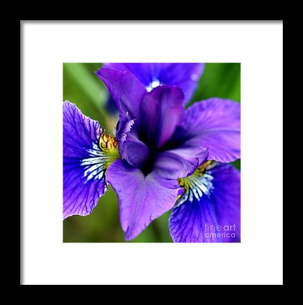Iris Framed Print featuring the photograph Wings I by Valerie Fuqua
