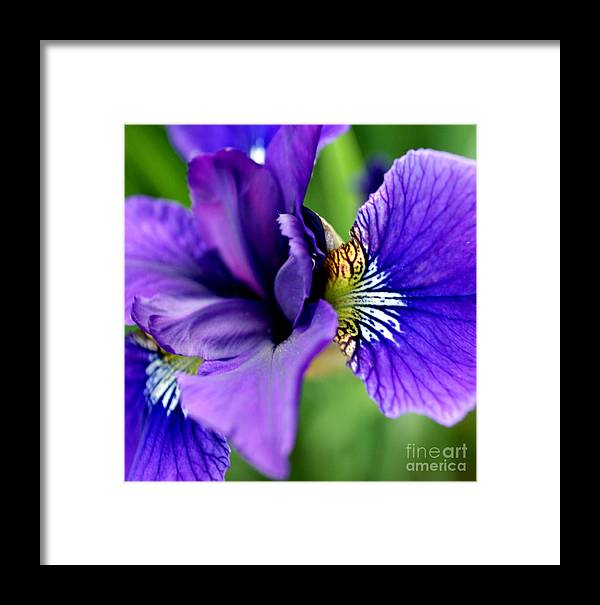 Iris Framed Print featuring the photograph Wings II by Valerie Fuqua