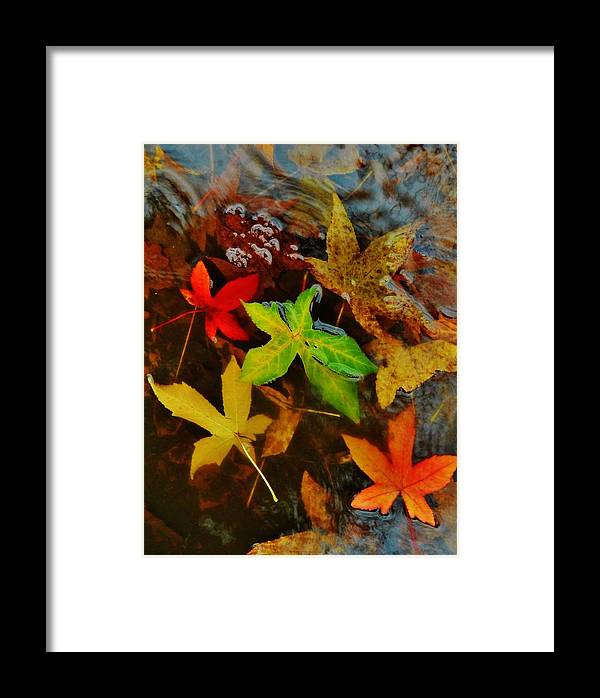 Nature Framed Print featuring the photograph Wings Of Angels by Charles Lucas