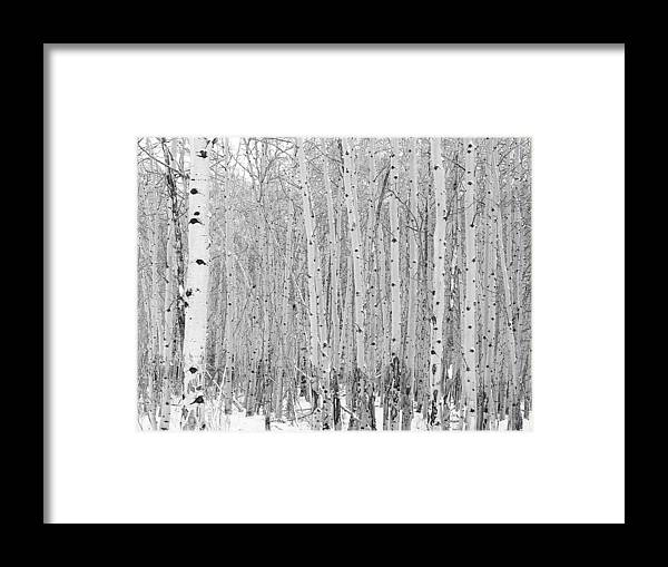 Nature Framed Print featuring the photograph Winter Aspen by Gerry Bates