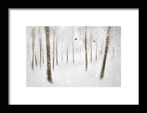 Winter Framed Print featuring the photograph Winter Birches by Gustav Davidsson