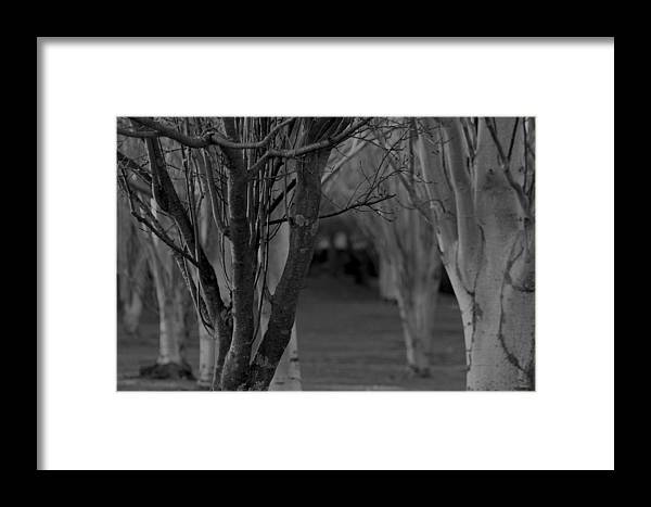 Black And White Framed Print featuring the photograph Winter Branches 1 by Pico Soriano