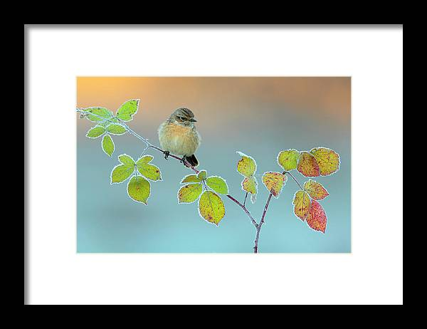 Stonechat Framed Print featuring the photograph Winter Colors by Andres Miguel Dominguez