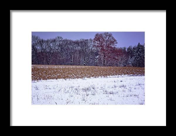 Corn Field Framed Print featuring the photograph Winter Corn Field by Tom Singleton