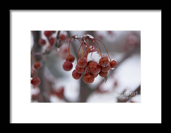 Winter Framed Print featuring the photograph Winter Crab Tree by David Bearden