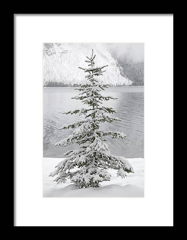 Montana Framed Print featuring the photograph Winter Decor by Diane Bohna