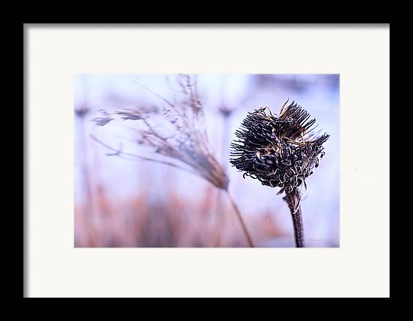 Flowers Framed Print featuring the photograph Winter Flowers by Bob Orsillo