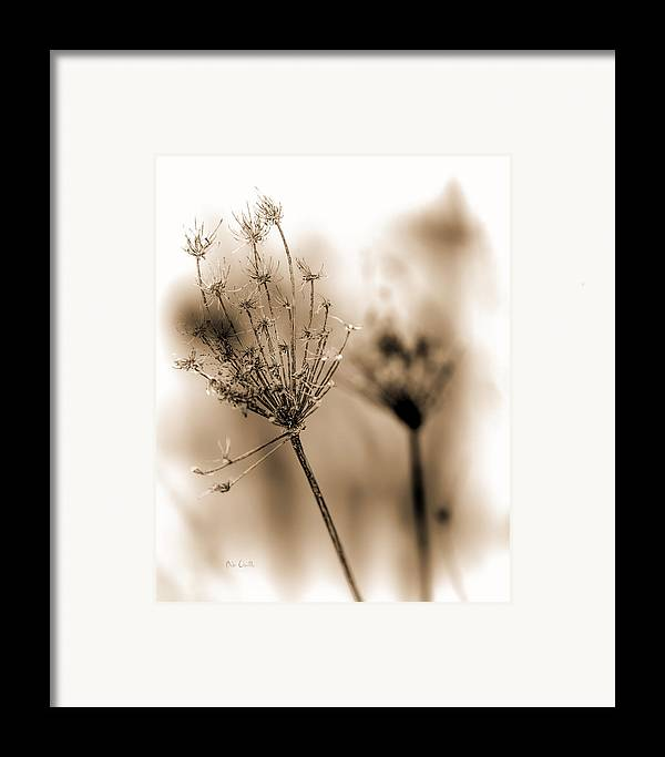 Flowers Framed Print featuring the photograph Winter Flowers II by Bob Orsillo