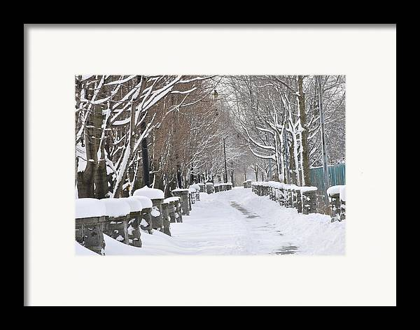 Winter Framed Print featuring the photograph Winter by Frederico Borges