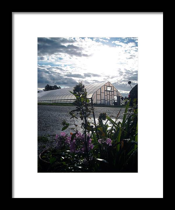 Greenhouses Framed Print featuring the photograph Winter Greens by Ishana Ingerman