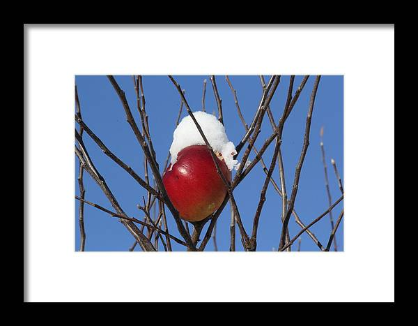 Winter Framed Print featuring the photograph Winter In Europe by Aarlangdi Art And Photography