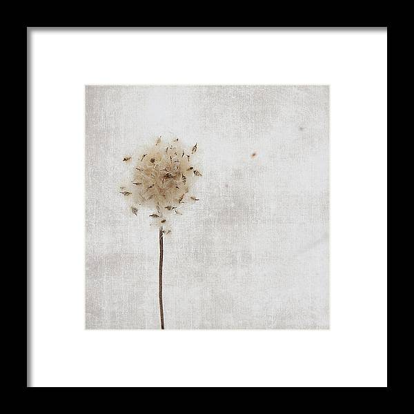 Nature Framed Print featuring the photograph Winter Seeds by Jamie McCann
