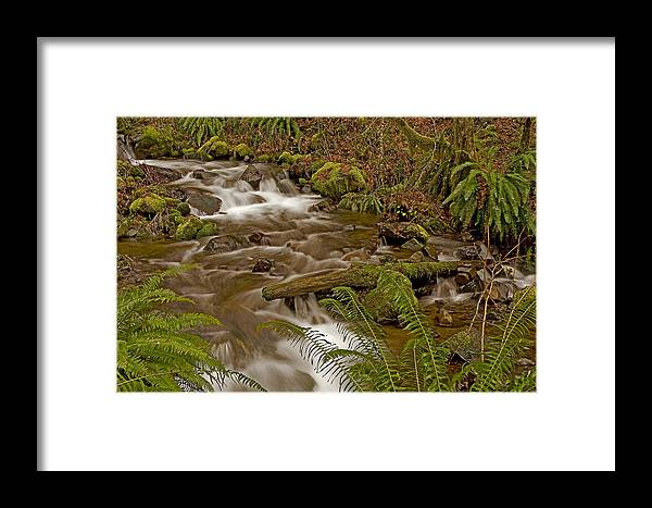 Pacific Framed Print featuring the photograph Winter Stream by Nick Boren