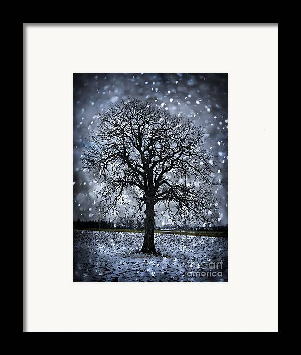 Lonely Framed Print featuring the photograph Winter Tree In Snowfall by Elena Elisseeva
