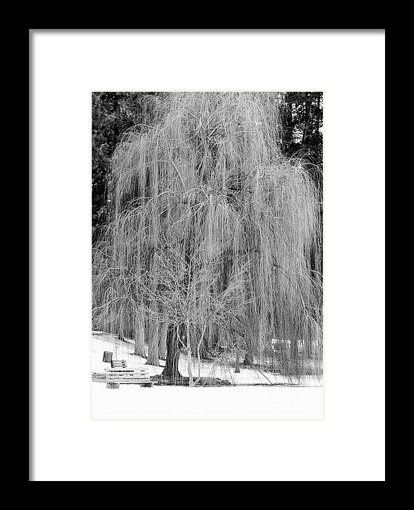 Winter Tree Framed Print featuring the photograph Winter Tree In Spokane - Black And White by Carol Groenen