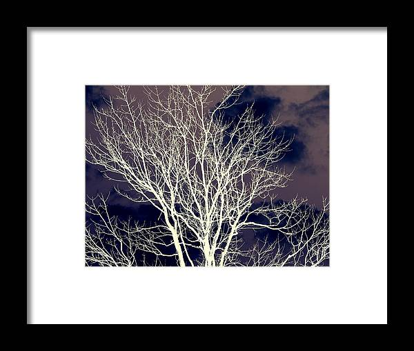 Framed Print featuring the photograph Winter Trees 2  by William  Adair