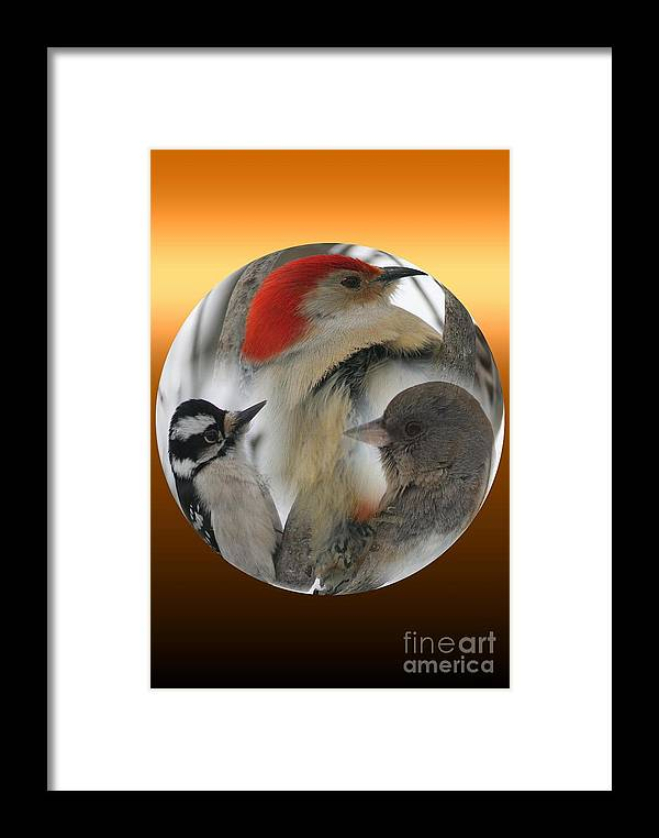 Birds Framed Print featuring the photograph Winter Trio by Rick Rauzi