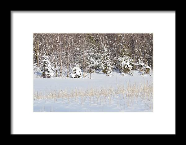 Winter Framed Print featuring the photograph Winter Wonderland by Dacia Doroff