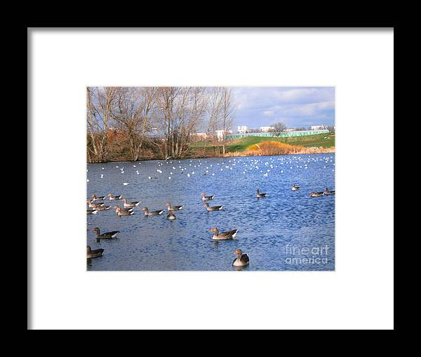 Lake Framed Print featuring the photograph Wintering Birds - Mayesbrook Park by Mudiama Kammoh