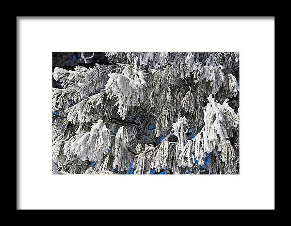 Snow Framed Print featuring the photograph Winter's Paintbrushes by Sharon Marx