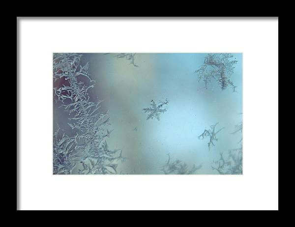 Frost Framed Print featuring the photograph Winter's Sketch by Candice Trimble