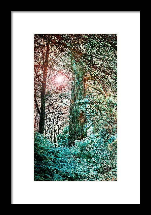 Sun Framed Print featuring the photograph Wintersun by Russell Brown