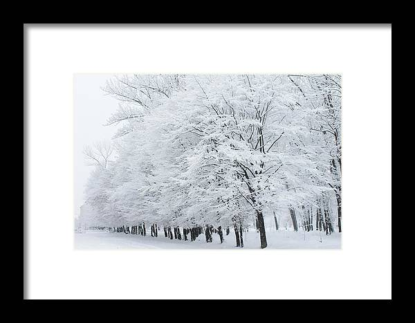 Winter Framed Print featuring the photograph Wintertime by Pavlo Kuzyk