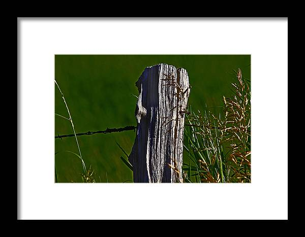 Nature Framed Print featuring the photograph Wired by David Kehrli