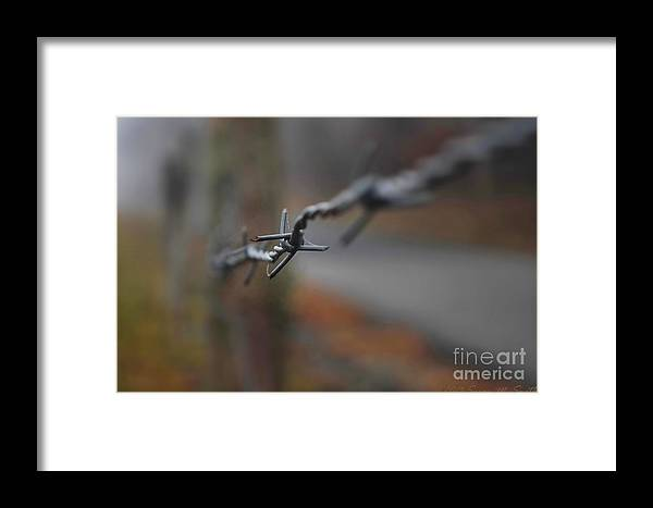 Photography Framed Print featuring the photograph Wired by Susan Smith