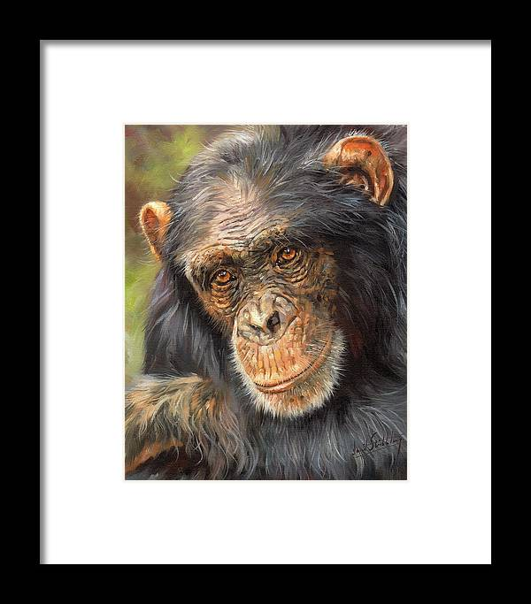 Chimp Framed Print featuring the painting Wise Eyes by David Stribbling