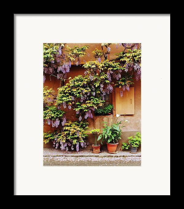 Wisteria Framed Print featuring the photograph Wisteria On Home In Zellenberg 4 by Greg Matchick